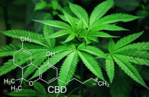 how to make money online with ctfo cbd oil